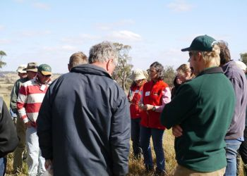 Native grass expert Millie Nichols teaches Barossa producers about native grasses at Keyneton.