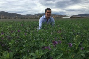 Lucerne trial results highlighted at Barossa conference