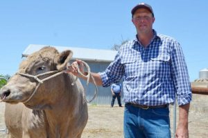 Better bull selection comes down to herd, market